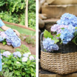 10 Natural Pesticides for your Plants