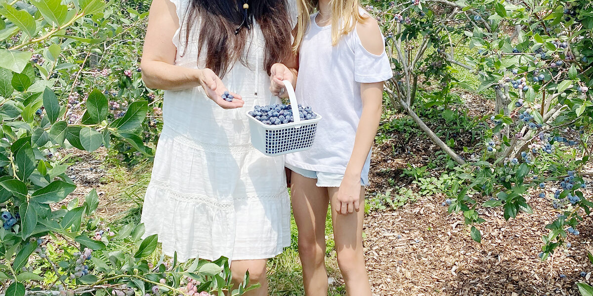 Blueberry Picking with Recipe